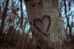 Σημάδι καρδιών στον κορμό δέντρων Στοκ φωτογραφία με δικαίωμα ελεύθερης χρήσης
