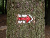 Σημάδι πεζοπορίας στον ξύλινο, τσεχικό τουρισμό φλοιών κορμών δέντρων Στοκ Εικόνες