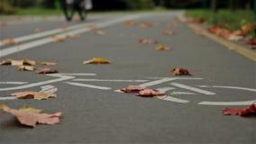 Σημάδι ποδηλάτων στο δρόμο, φθινόπωρο bicyclist Κλείστε επάνω, οριζόντιος πυροβολισμός ολισθαινόντων ρυθμιστών απόθεμα βίντεο