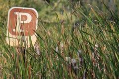 Σημάδι στάθμευσης που περιβάλλεται από τα cattails που ανθίζουν σε ένα έλος κατά τη διάρκεια της εποχής πτώσης Στοκ Φωτογραφίες