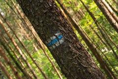 Σημάδι στο δέντρο Στοκ εικόνες με δικαίωμα ελεύθερης χρήσης
