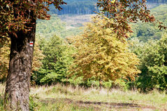 Σημάδι τουριστών στο δέντρο κάστανων στο δάσος φθινοπώρου Στοκ Φωτογραφίες