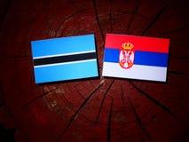 Σημαία της Μποτσουάνα με τη σερβική σημαία σε ένα κολόβωμα δέντρων που απομονώνεται Στοκ Εικόνες