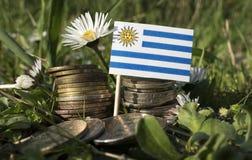 Σημαία της Ουρουγουάης με το σωρό των νομισμάτων χρημάτων με τη χλόη Στοκ Εικόνα