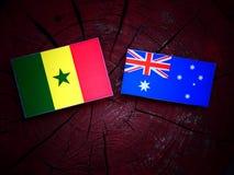 Σημαία της Σενεγάλης με την αυστραλιανή σημαία σε ένα κολόβωμα δέντρων που απομονώνεται Στοκ φωτογραφία με δικαίωμα ελεύθερης χρήσης