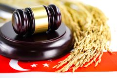 Σημαία της Σιγκαπούρης και σφυρί δικαστών με το χρυσό σιτάρι από το αγρόκτημα γεωργίας έννοια δικαστηρίων δικαιοσύνης δ στοκ εικόνα με δικαίωμα ελεύθερης χρήσης