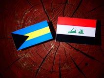 Σημαία των Μπαχαμών με την ιρακινή σημαία σε ένα κολόβωμα δέντρων που απομονώνεται Στοκ φωτογραφία με δικαίωμα ελεύθερης χρήσης