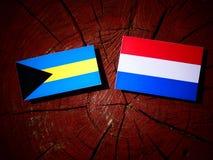 Σημαία των Μπαχαμών με την ολλανδική σημαία σε ένα κολόβωμα δέντρων που απομονώνεται Στοκ Φωτογραφίες