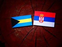 Σημαία των Μπαχαμών με τη σερβική σημαία σε ένα κολόβωμα δέντρων Στοκ Εικόνα