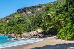 Σημαντική παραλία Anse, νησί Mahe, Σεϋχέλλες, Ινδικός Ωκεανός, ανατολή AF Στοκ Εικόνες