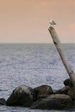 σημείο του Manitoba βούβαλων Στοκ Φωτογραφία