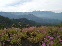 Σημείο το πάρκο λουλουδιών Manalalu Bajawa στοκ εικόνες