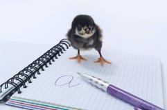 σημειωματάριο κοτόπουλ& Στοκ Εικόνα
