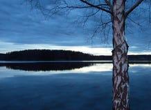Σημύδα αργά το βράδυ Στοκ Εικόνα