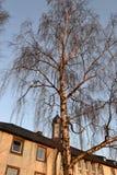 Σημύδα και μονή Στοκ Εικόνα