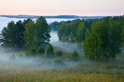 Σημύδα που καλύπτεται με την πρασινάδα Στοκ Φωτογραφίες