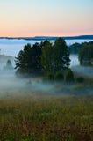 Σημύδα που καλύπτεται με την πρασινάδα Στοκ Εικόνες