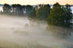 Σημύδα που καλύπτεται με την πρασινάδα Στοκ φωτογραφία με δικαίωμα ελεύθερης χρήσης