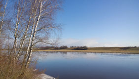 Σημύδα στην όχθη ποταμού Στοκ Φωτογραφία