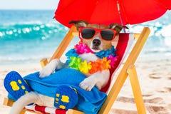 Σιέστα σκυλιών στην καρέκλα παραλιών στοκ εικόνες με δικαίωμα ελεύθερης χρήσης