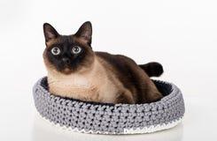 Σιαμέζα γάτα που βρίσκεται στο χειροποίητο καλάθι Άσπρη ανασκόπηση Πορτρέτο Στοκ φωτογραφίες με δικαίωμα ελεύθερης χρήσης