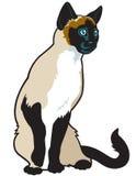 Σιαμέζα γάτα Στοκ εικόνες με δικαίωμα ελεύθερης χρήσης