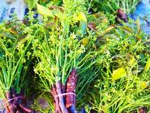Σιαμέζος σωρός φύλλων neem, λαχανικά που τρώνε για υγιή και το κομμάτι Στοκ Φωτογραφία