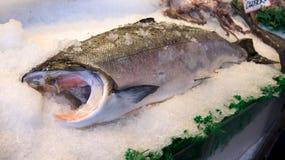 ΣΙΑΤΛ ΟΥΑΣΙΓΚΤΟΝ ΗΠΑ - τον Οκτώβριο του 2014 - φρέσκια επίδειξη θαλασσινών στη δημόσια αγορά θέσεων λούτσων Στοκ εικόνες με δικαίωμα ελεύθερης χρήσης