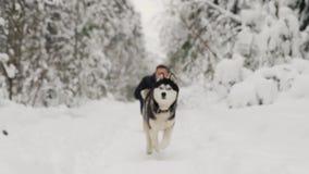 Σιβηρικά γεροδεμένα τρεξίματα σε σε αργή κίνηση στη κάμερα από τον οικοδεσπότη, κινούμενη εστίαση φιλμ μικρού μήκους
