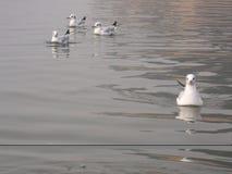 Σιβηρικά πουλιά Στοκ φωτογραφία με δικαίωμα ελεύθερης χρήσης