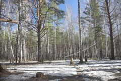 σιβηρική άνοιξη στοκ φωτογραφία