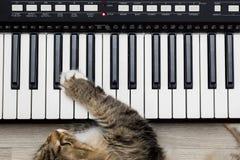 Σιβηρική δασική γάτα που παίζει το συνθέτη πληκτρολογίων ελεγκτών του MIDI στοκ εικόνες με δικαίωμα ελεύθερης χρήσης