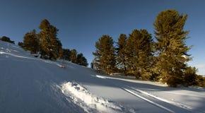 Σιβηρικός δασικός, χιονώδης χειμώνας κέδρων, η σκιά των δέντρων Στοκ εικόνες με δικαίωμα ελεύθερης χρήσης