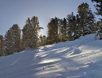 Σιβηρικός δασικός, χιονώδης χειμώνας κέδρων, η σκιά των δέντρων Στοκ Εικόνες