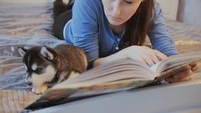 Σιβηρικός γεροδεμένος κουταβιών είναι γυναίκα στο κρεβάτι απόθεμα βίντεο