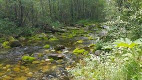 Σιβηρικός ποταμός βουνών Στοκ εικόνα με δικαίωμα ελεύθερης χρήσης