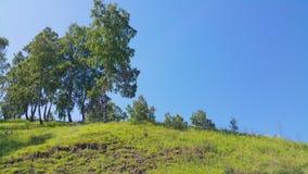 Σιβηρικός λόφος με τις σημύδες Στοκ Εικόνα