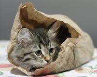 Σιβηρικό γατάκι σε μια papar τσάντα Στοκ φωτογραφίες με δικαίωμα ελεύθερης χρήσης