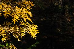 Σιβηρικό δάσος φθινοπώρου, φως αντίθεσης στοκ εικόνα