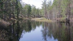 Σιβηρικό τοπίο: ένας ήρεμος ποταμός taiga φιλμ μικρού μήκους