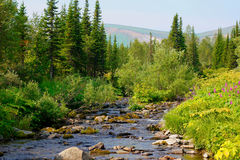 Σιβηρικό taiga. Στοκ φωτογραφία με δικαίωμα ελεύθερης χρήσης