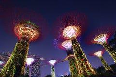 ΣΙΓΚΑΠΟΎΡΗ - Ιούλιος: Nightview του άλσους Supertree στους κήπους από τον κόλπο τον Ιούλιο του 2016 στη Σιγκαπούρη Μέτρηση 101 εκ Στοκ εικόνες με δικαίωμα ελεύθερης χρήσης