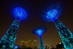 ΣΙΓΚΑΠΟΎΡΗ - Ιούλιος: Nightview του άλσους Supertree στους κήπους από τον κόλπο τον Ιούλιο του 2016 στη Σιγκαπούρη Μέτρηση 101 εκ Στοκ Εικόνες