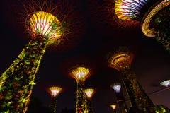 ΣΙΓΚΑΠΟΎΡΗ - Ιούλιος: Nightview του άλσους Supertree στους κήπους από τον κόλπο τον Ιούλιο του 2016 στη Σιγκαπούρη Μέτρηση 101 εκ Στοκ φωτογραφία με δικαίωμα ελεύθερης χρήσης