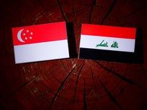 Σιγκαπούριος σημαία με την ιρακινή σημαία σε ένα κολόβωμα δέντρων που απομονώνεται Στοκ Φωτογραφία