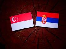 Σιγκαπούριος σημαία με τη σερβική σημαία σε ένα κολόβωμα δέντρων που απομονώνεται Στοκ φωτογραφίες με δικαίωμα ελεύθερης χρήσης