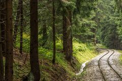 Σιδηρόδρομος μέσω του δάσους Στοκ φωτογραφία με δικαίωμα ελεύθερης χρήσης