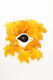 σιρόπι σφενδάμνου στοκ φωτογραφίες με δικαίωμα ελεύθερης χρήσης