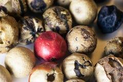 Σιτάρια πιπεριών Στοκ φωτογραφίες με δικαίωμα ελεύθερης χρήσης