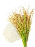 Σιτάρια ρυζιού, αυτί του ρυζιού στο άσπρο υπόβαθρο στοκ φωτογραφία με δικαίωμα ελεύθερης χρήσης